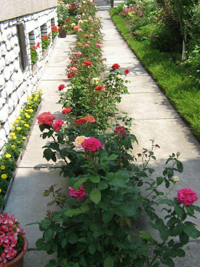 Оформление участка цветниками | Дизайн розового сада ...