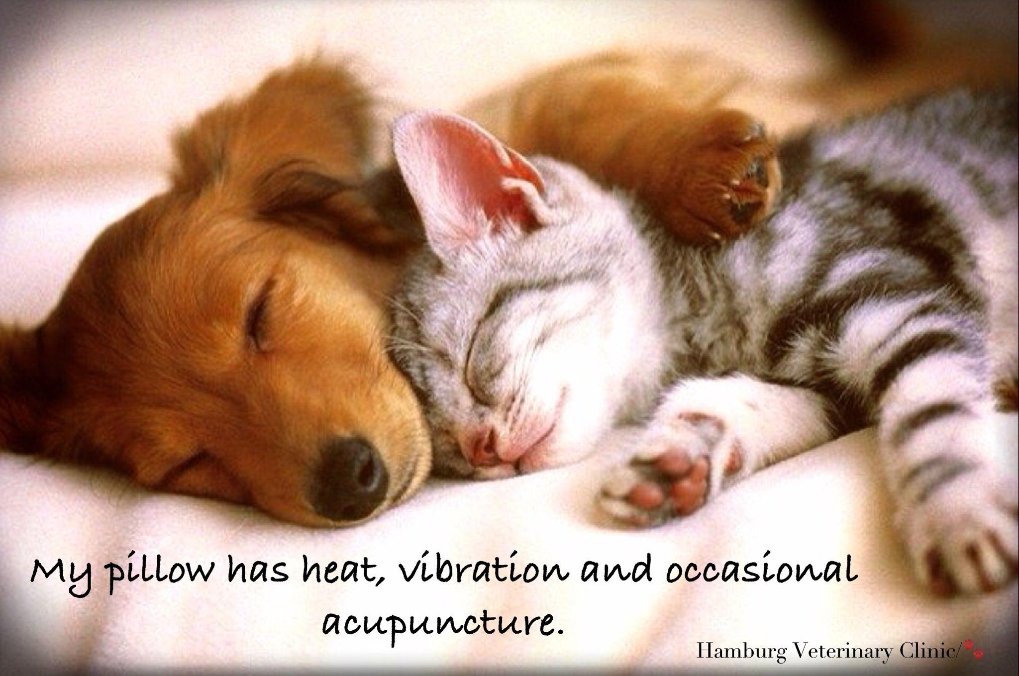Good Night Sweet Dreams Animals Sleeping Together Cute Dog