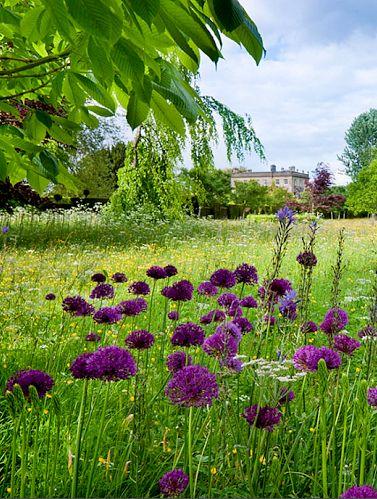 english country garden highgrove england highgrove garden pinterest paysage. Black Bedroom Furniture Sets. Home Design Ideas