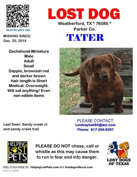 Lostdog Tx Texas Us Lost Dog Registry Losing A Dog Dogs