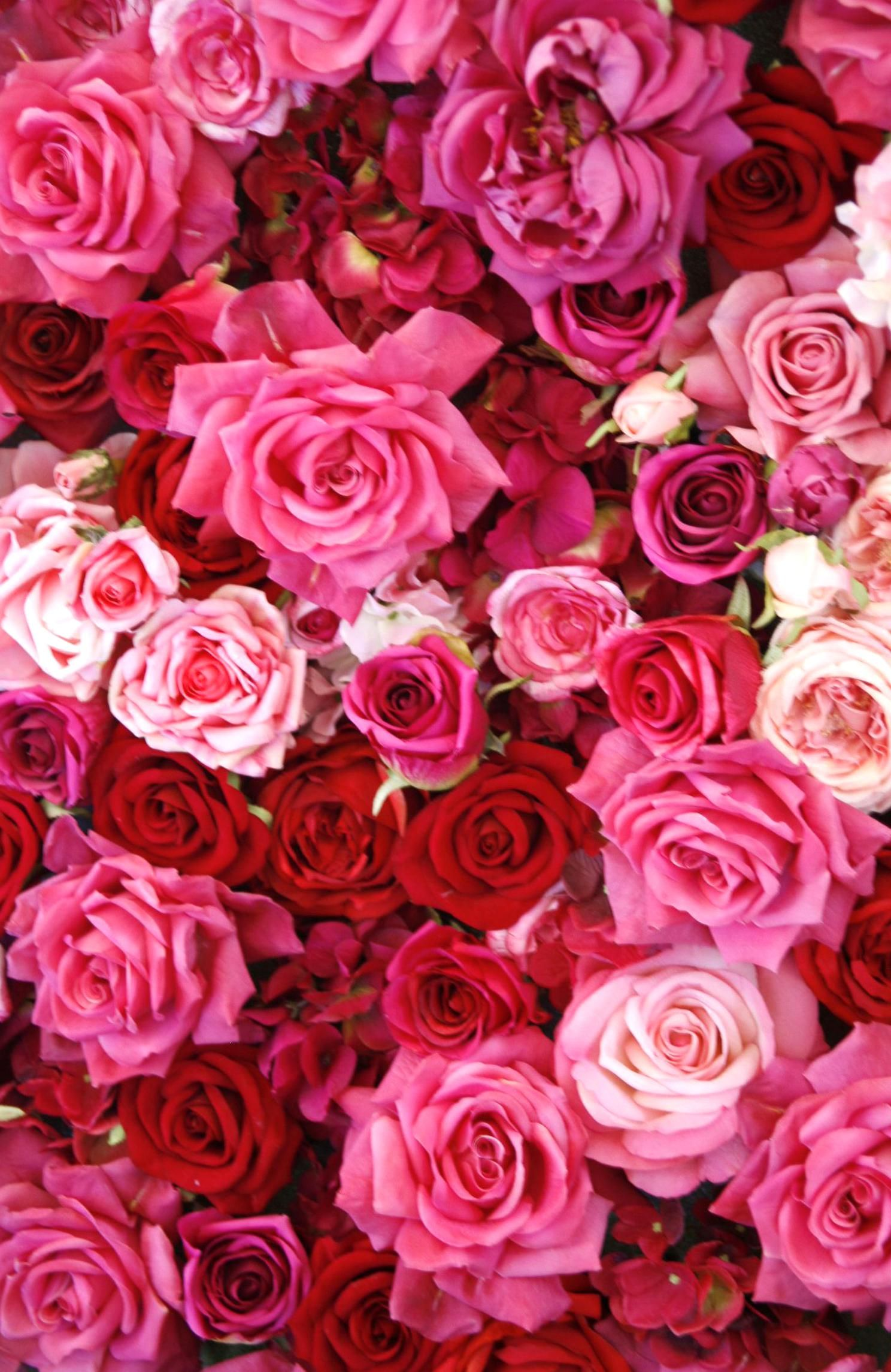 The Language Of Flowers Goodhousemag In 2020 Red Roses Wallpaper Rose Color Meanings Red And Pink Roses