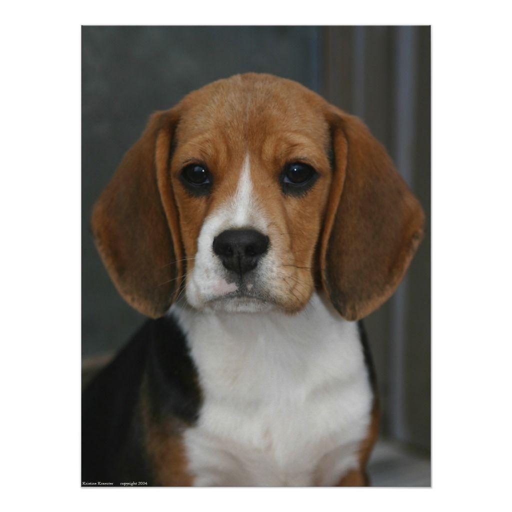 Beagle Portrait Poster Zazzle Com Beagle Pet Memorials Poster
