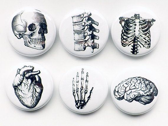 Human Anatomy flair Magnet Button Pin Badges Coaster teacher gifts brain skull science anatom Human Anatomy flair Magnet Button Pin Badges Coaster teacher gifts brain sku...