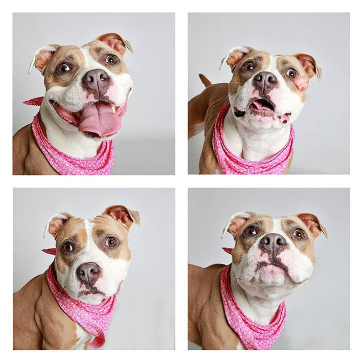 This 'Doggie Photobooth' Captures Amazingly Candid Images of Dogs That Need a Home | Fstoppers