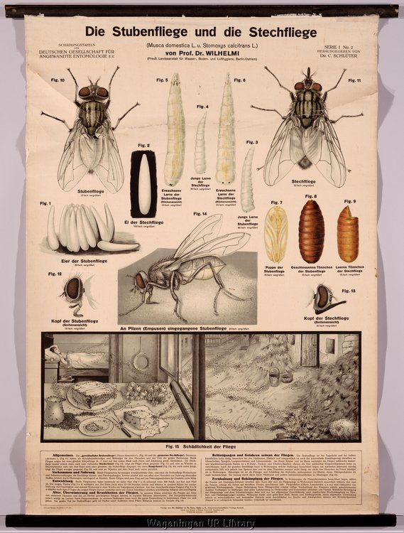 Wall charts Entomology and Phytopathology [Binnenhaven] | Curiosité ...