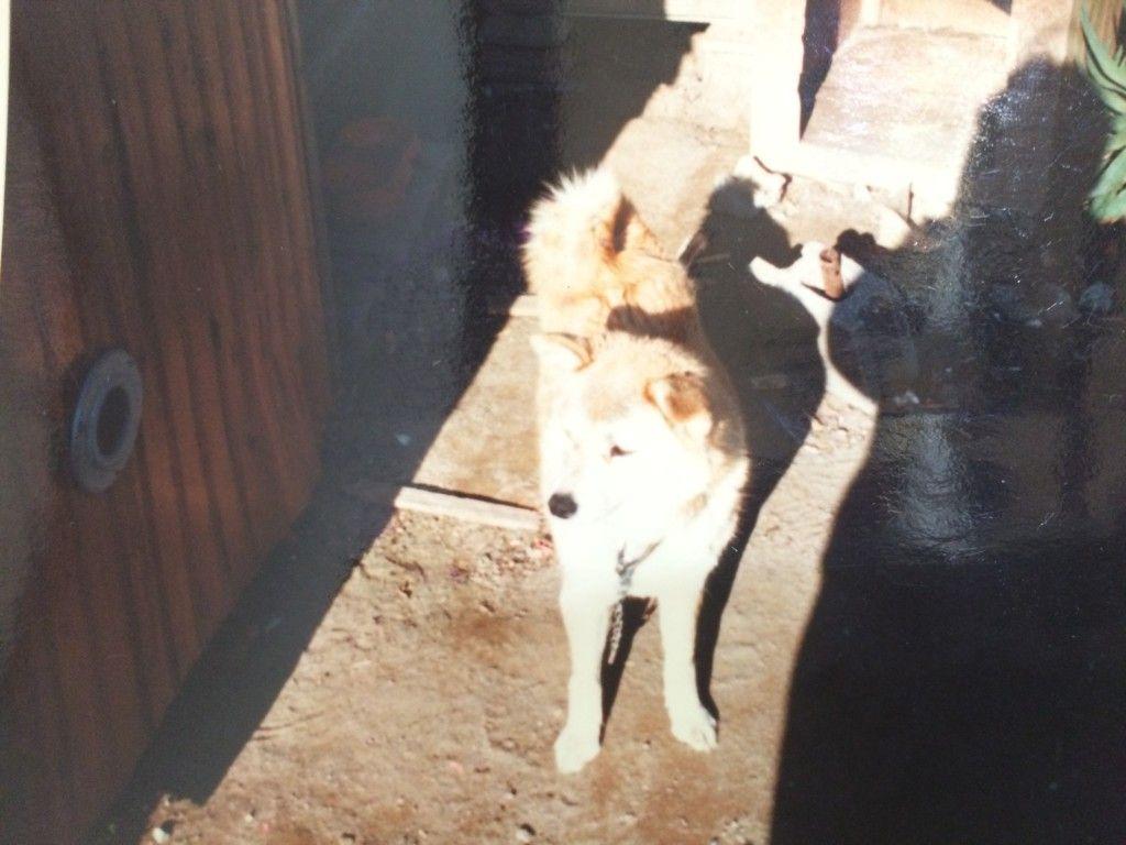 犬が立て続けに死んだペットロスの悲しみから立ち直った方法とは ペットロス ペット 犬