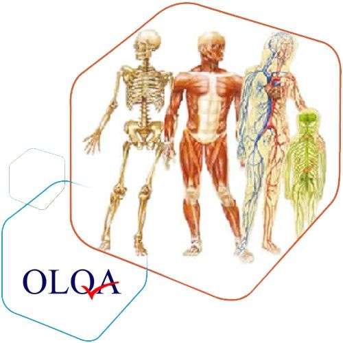 Human Anatomy Online Course Free Inexpensive Human Anatomy Female