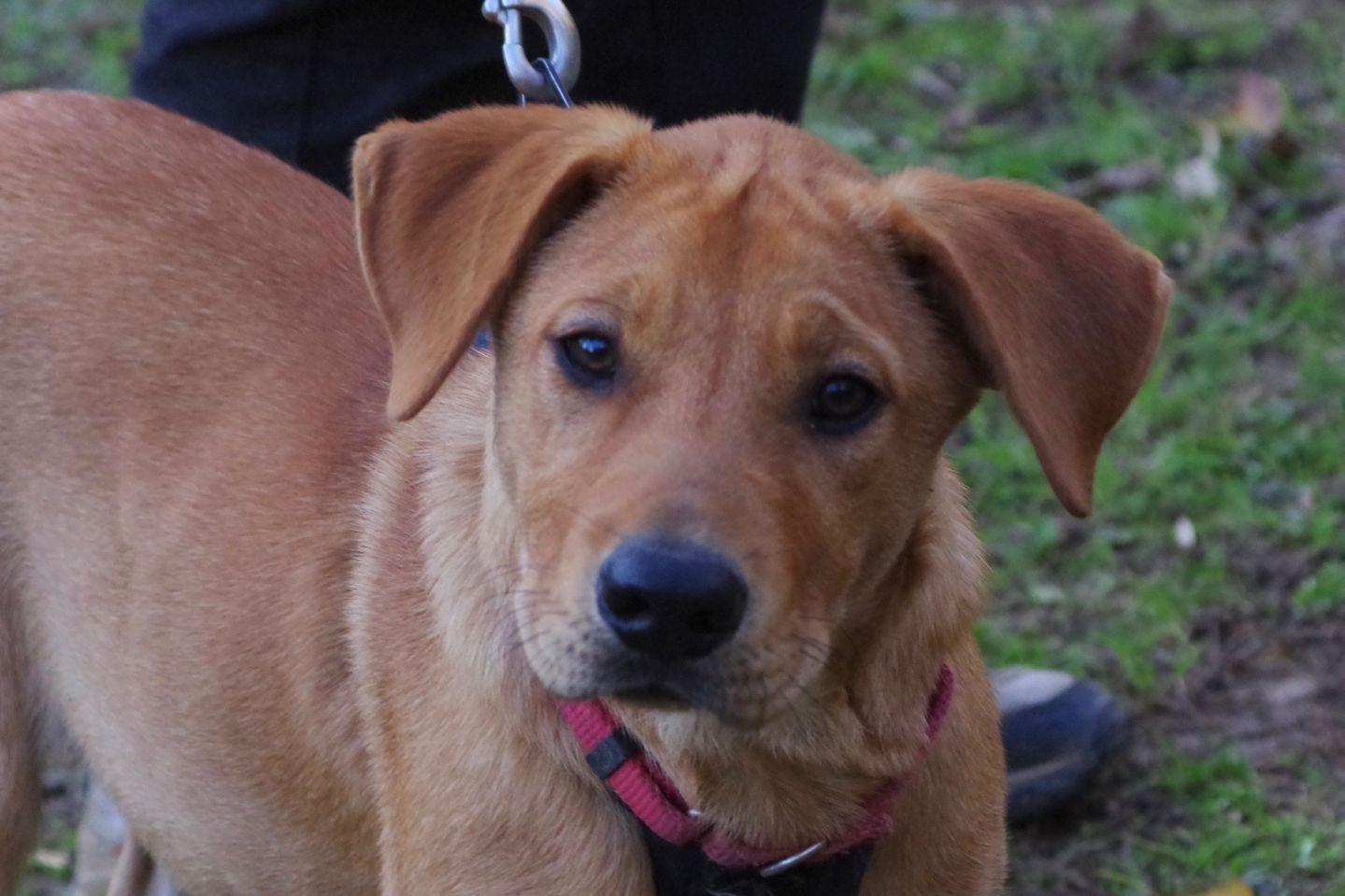 Adopt Jada on Dog pounds