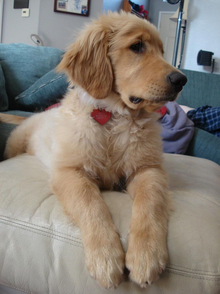 Huge Costly Mistakes That Puppy Owners Make Puppies