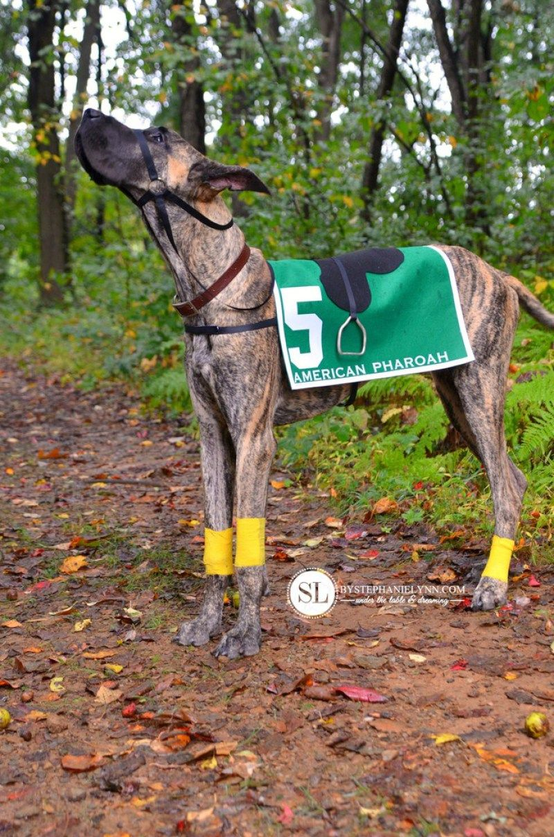 Race Horse Dog Costumes Halloween Large Diy Dog Costumes