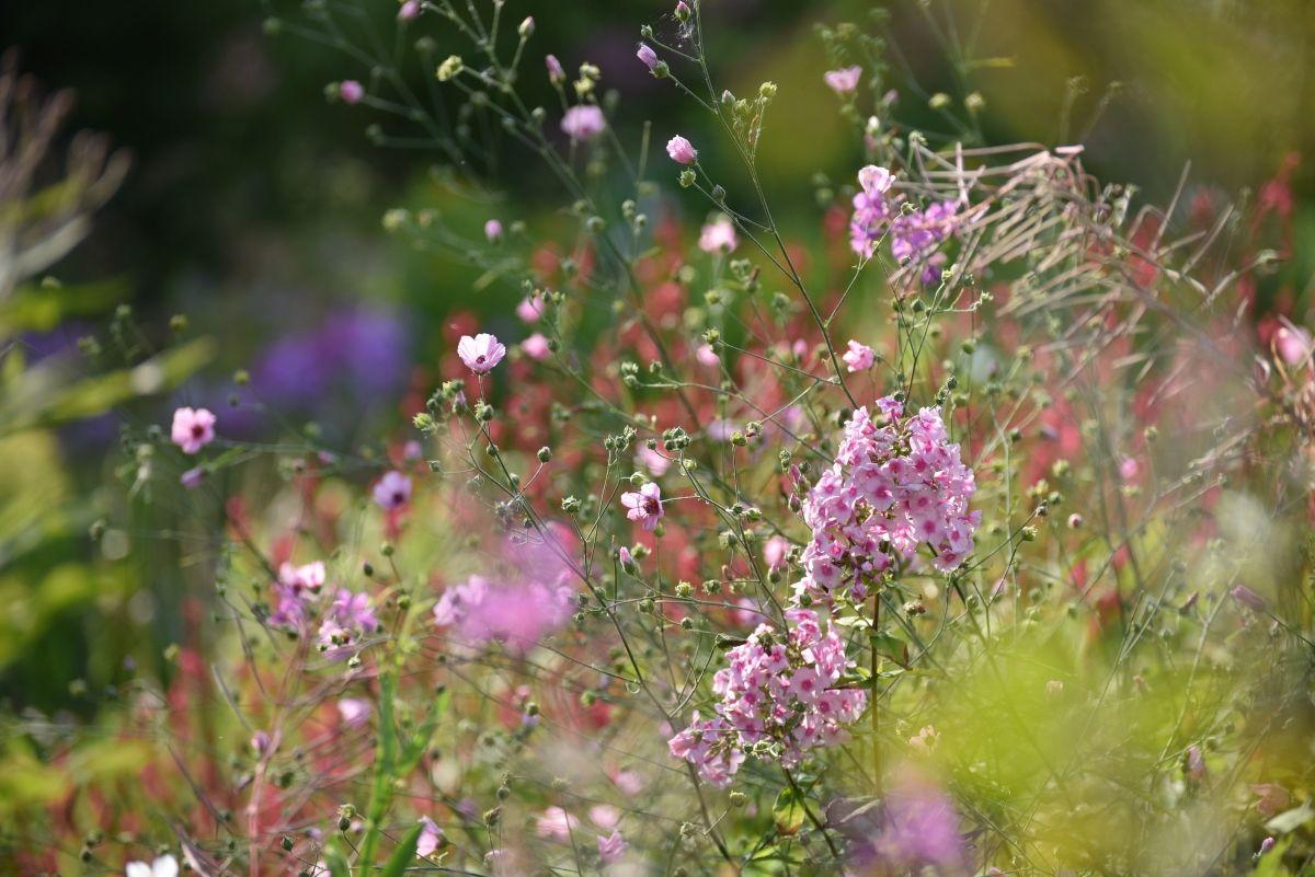 Storchschnabel Und Andere Stauden 2018 Garten Plants Geraniums