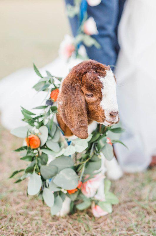 #cute #cuteanimals #cutegoats #goats #pets #petlovers #petstagram #petsofinstagram #sweater #animals #animallovers #nature #outdoor #outdoors #explore #babygoats #flowers