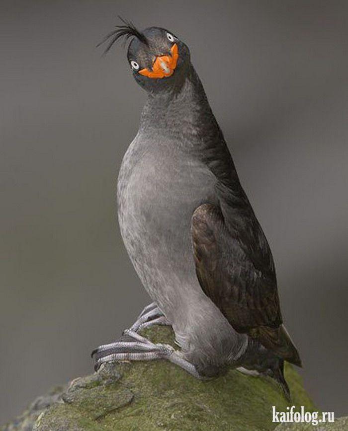 Картинки прикольные про птиц