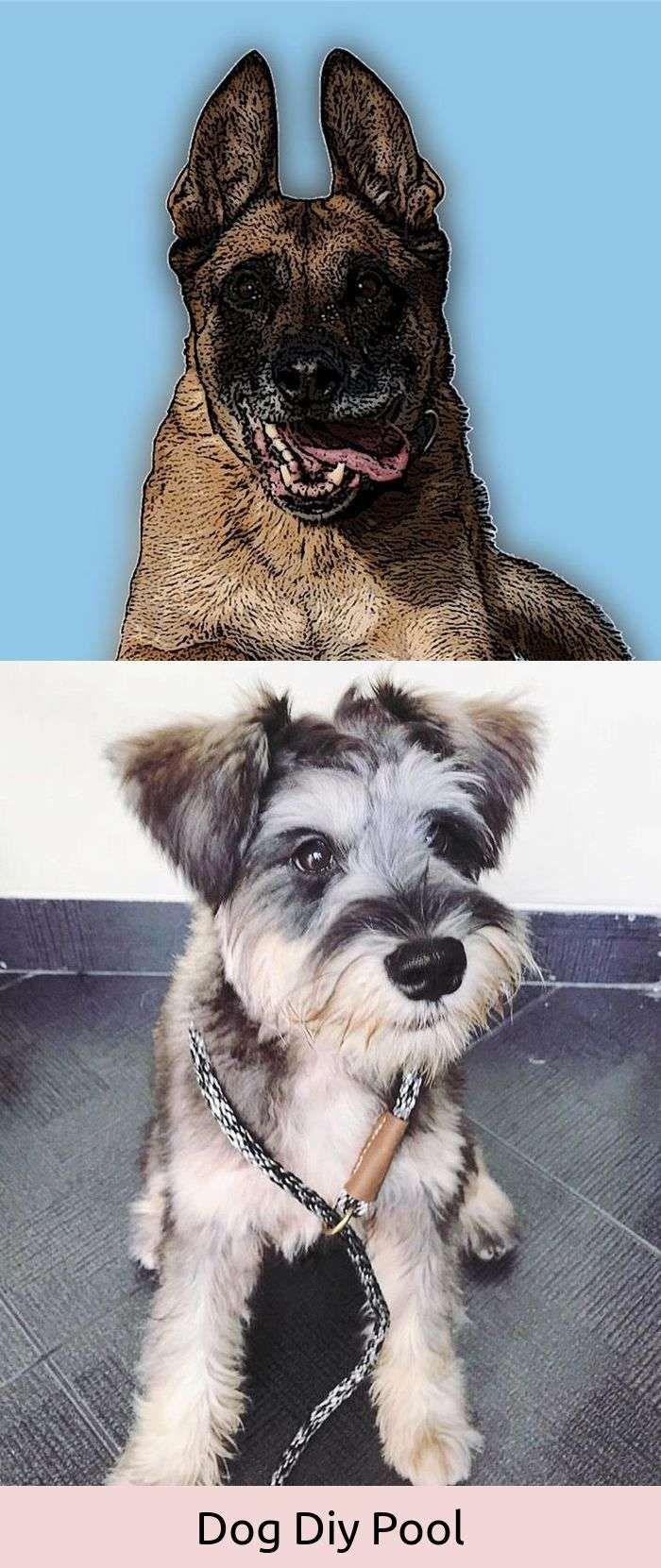 Funny dog jokes meme dogs hacks pinterest dogs dog hacks and