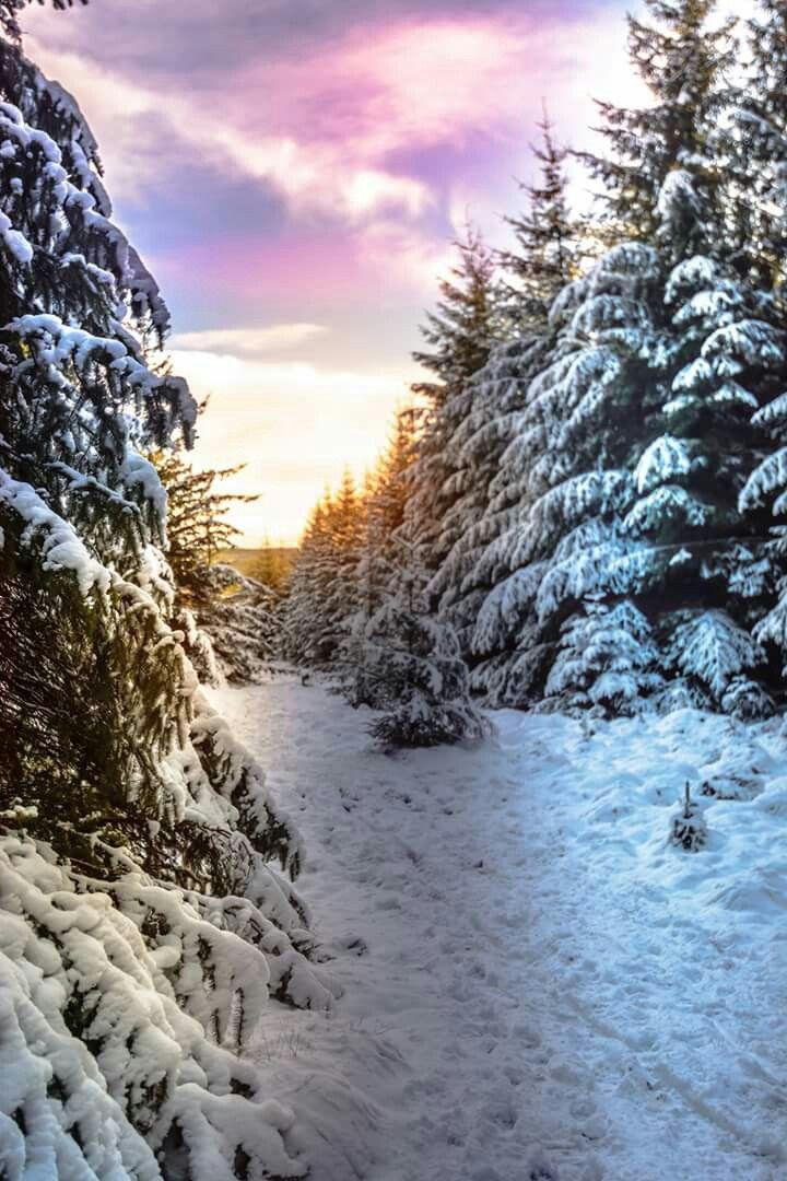 Winter Wonderland   Winter   Pinterest   Winter und Schnee