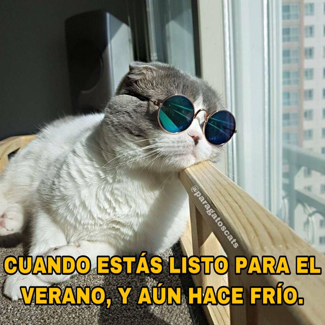 Lista Para El Verano Memes De Gatos Memes Kitty Gatos