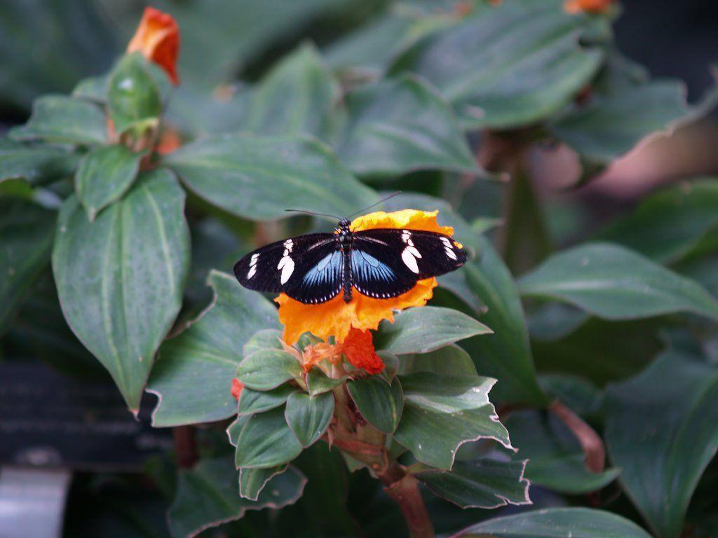 Niagara Butterfly Gardens: http://sothebysrealty.ca/blog/en/2016/07/20/from-wine-tours-to-safaris-a-72-hour-guide-to-niagara-falls-ontario/ #realestate #design #lifestyle