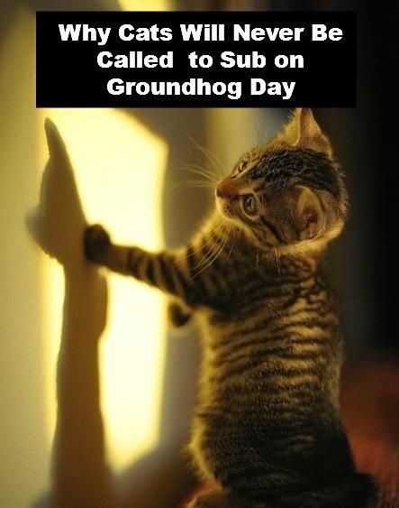 Why Cats Will Never Be Called To Sub On Groundhog Day Cats Are Purr Fect Pinterest Kittens Cats And Kittens Cutest