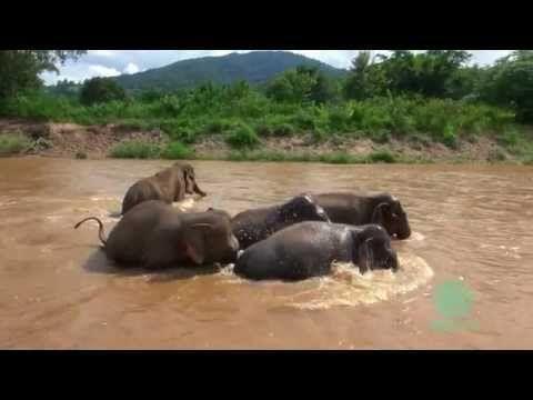 Manada protegiendo a un tierno bebé elefante