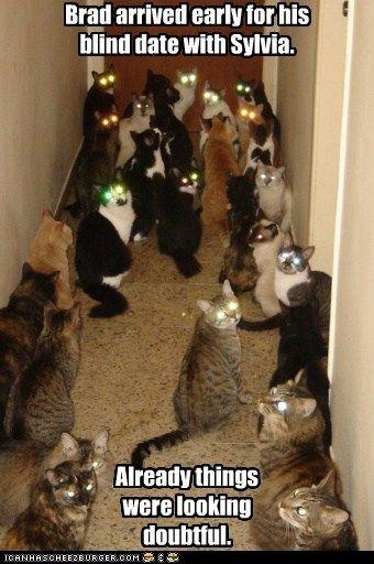Crazy cat lady dating website