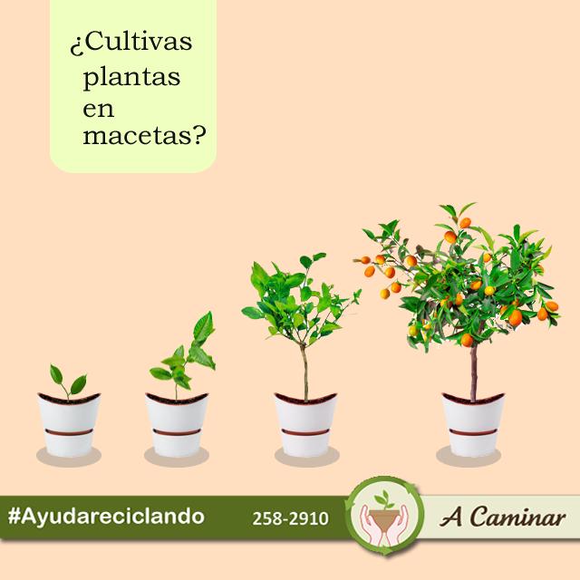 """#SepartedelCambio #Recicla No hay nada mejor de sembrar las plantas de consumo personal en casa... Contáctenos : 258 2910 / RPM.#985030860 Descubre más de nuestro trabajo aquí:  http://acaminarperu.org/donaciones.html """"Acaminar Perú"""" reciclamos para ayudar ❤"""