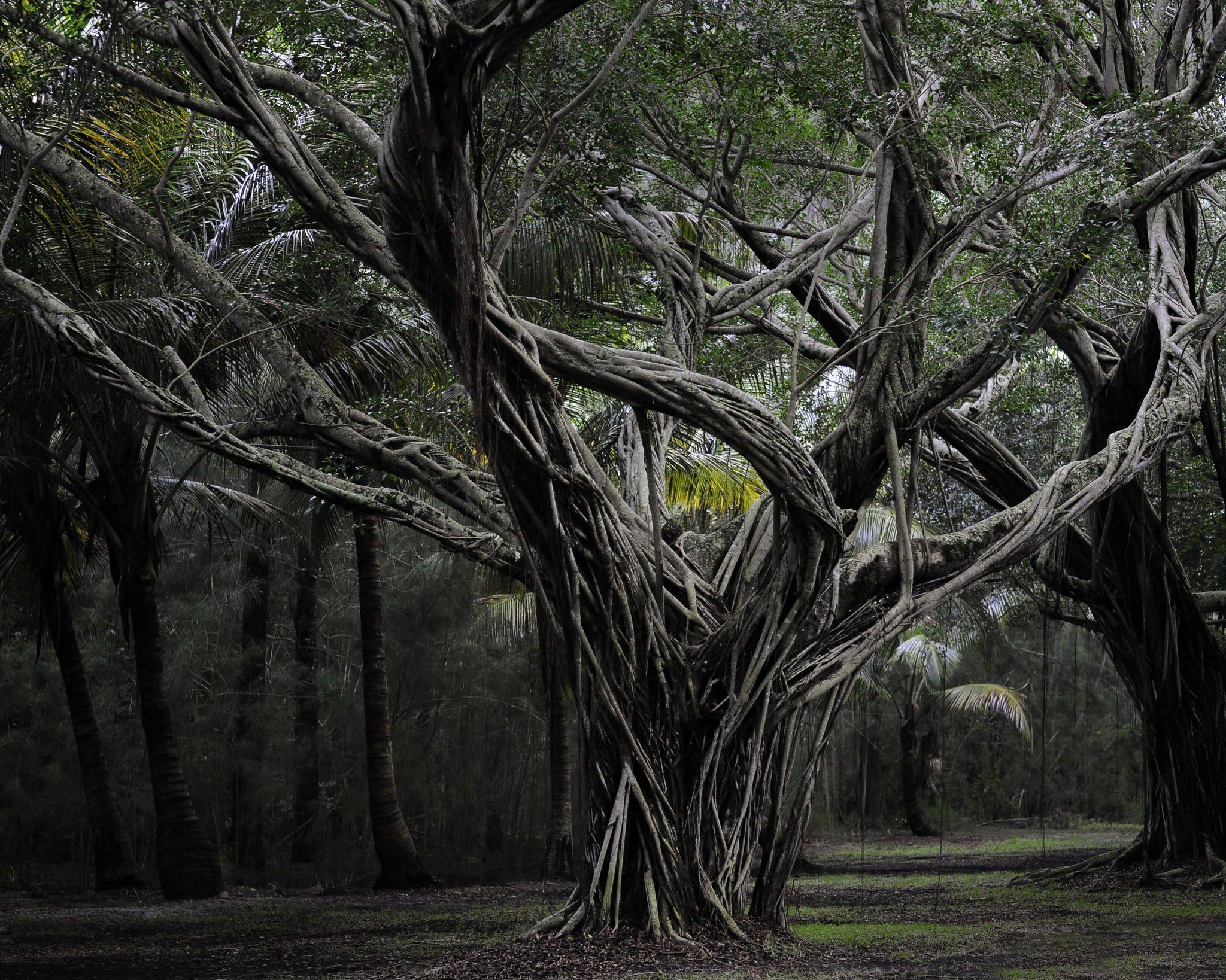 Jungle by Noah Rosen on 500px