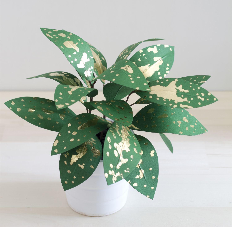 Corrie_hogg_paper_plant_gold_dust_dracaena.jpg