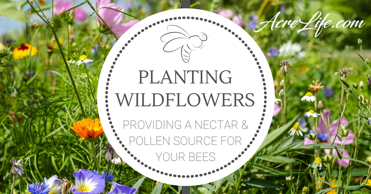 Planting Wildflowers in 5 Easy Steps - Acre Life Flowers ...