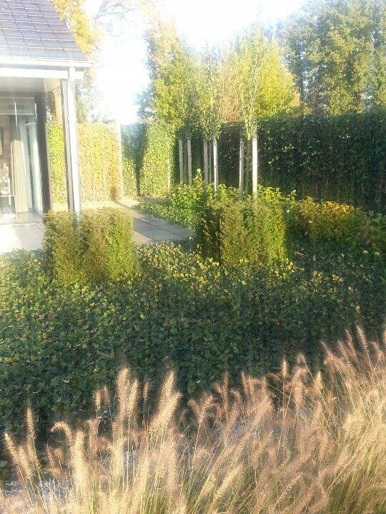 Groene tuin in november