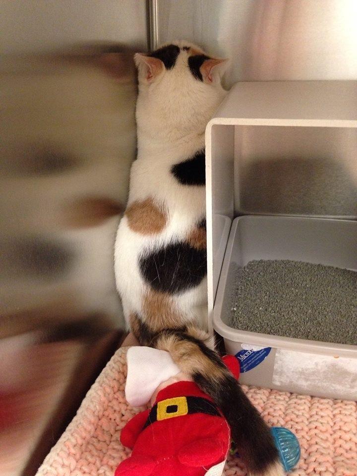 Adopt Gizmo On Animals Animal Shelter Adoption