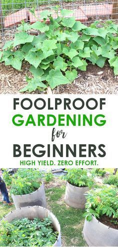 How we grew HUNDREDS of pounds of food without weeding or watering a single time!