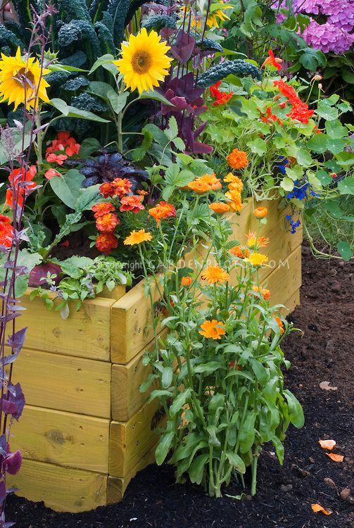 Sunflowers, Calendula, Veggies, Marigolds, Kale, Raised