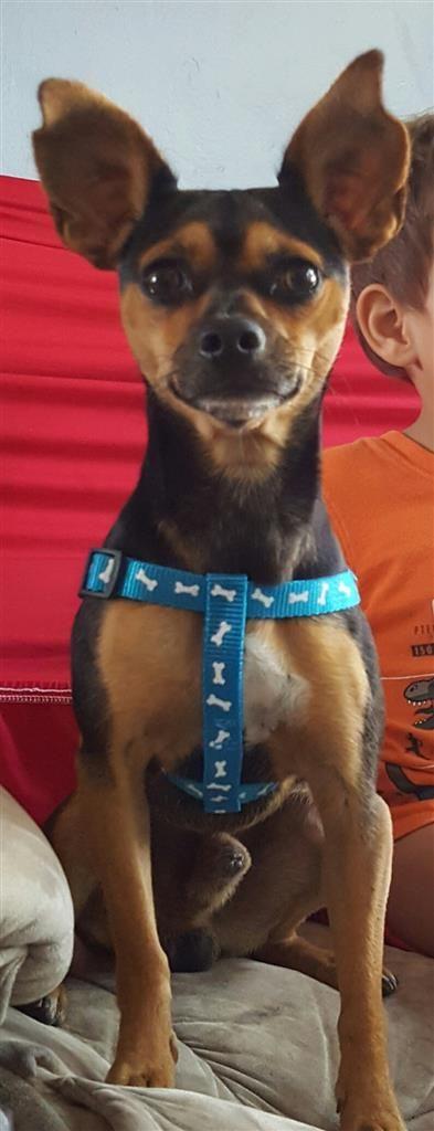 Found Dog Male Homestead Fl Usa 33033 On December 10 2016