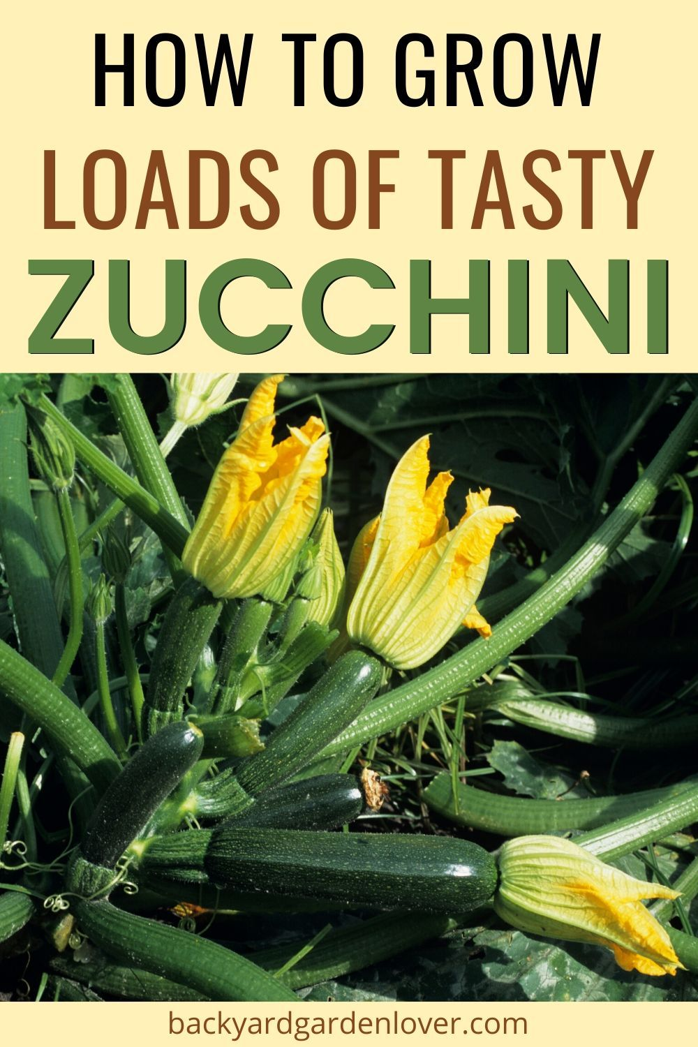 How To Grow Zucchini (Courgette) And Enjoy It All Summer Long