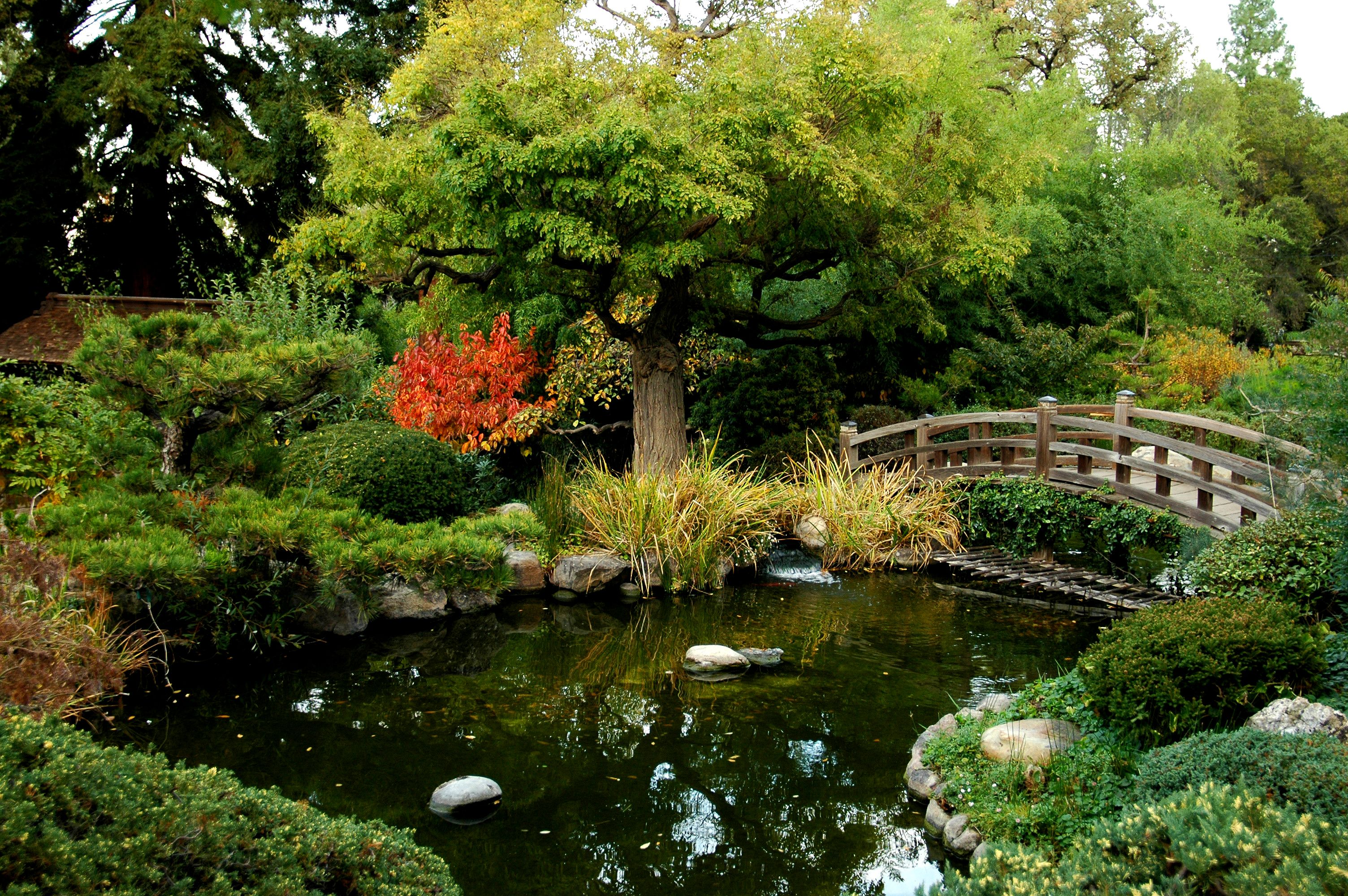 Landscaping ponds pond garden tour rail city garden june for Koi pond supply of japan