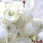 Vintage Moments-Fotografie und Blütenpoesie - Belinda Anton