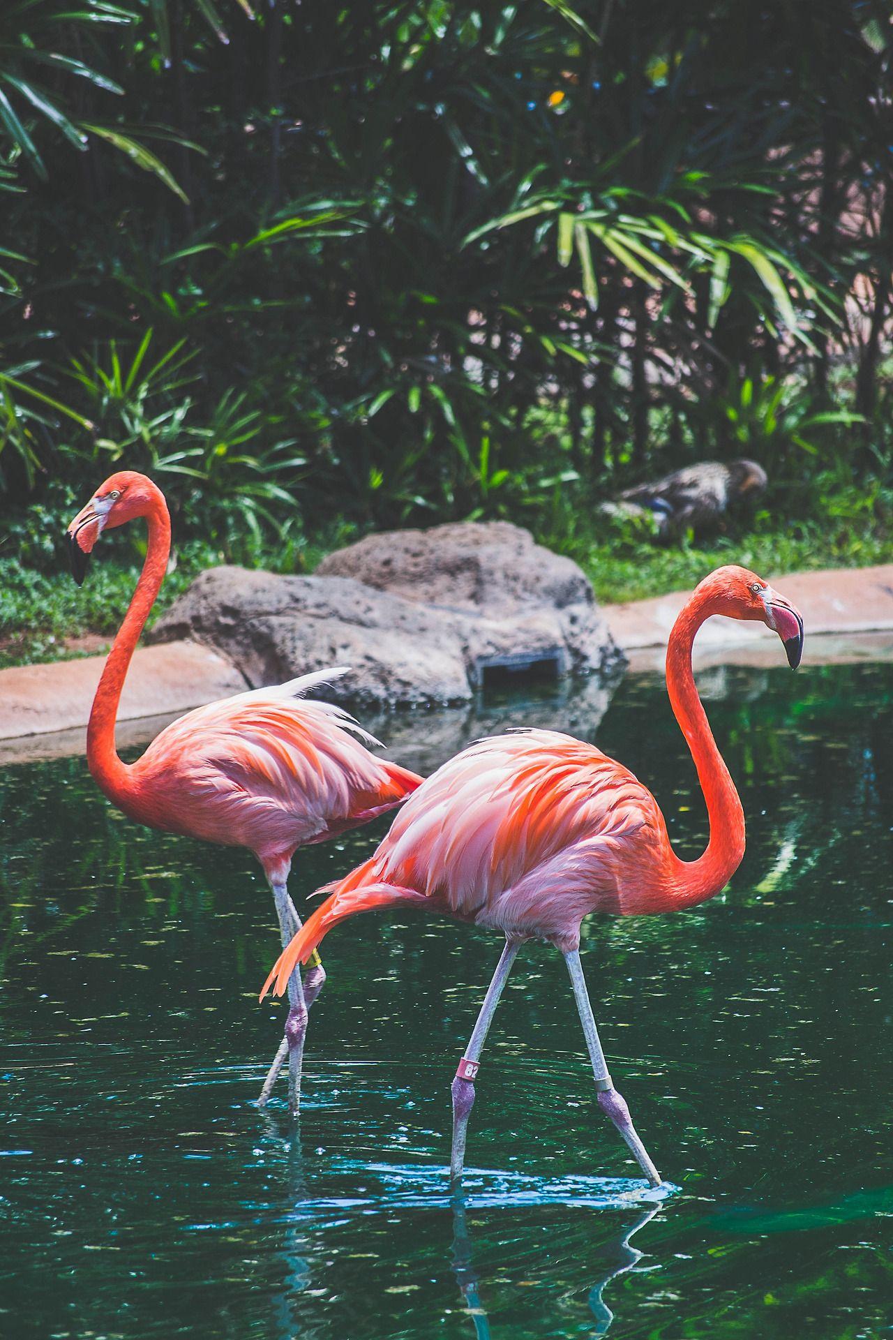 My photography — Flamingo [x] | Фламинго обои, Зеленые ...