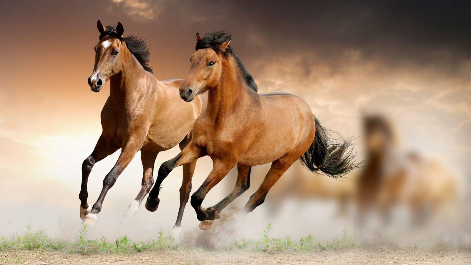 Horse Hd Wallpapers 1920x1080 Jpg 1600 900 Horse Wallpaper Images, Photos, Reviews
