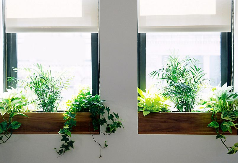 The Sill + Terrain: Planting a Window Box | Indoor window boxes ...