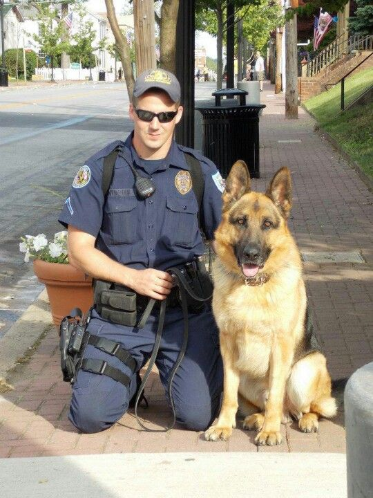 K9 Gaston Military Service Dogs Military Dogs Military Working