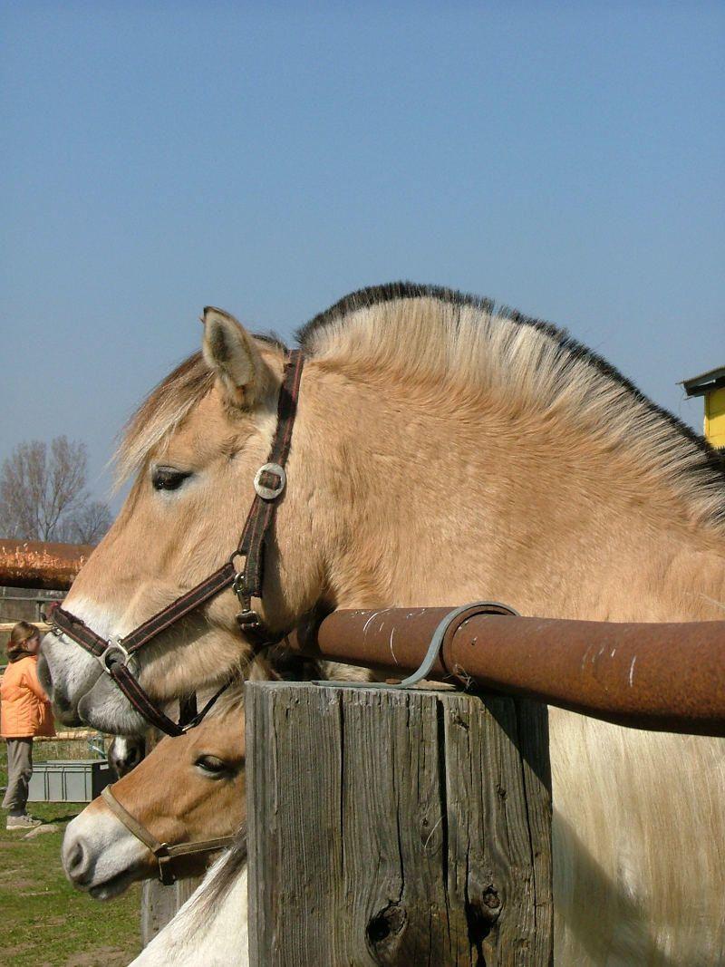 """pferde fingerspiel für kleine kita  kinder """"fünf reiter"""