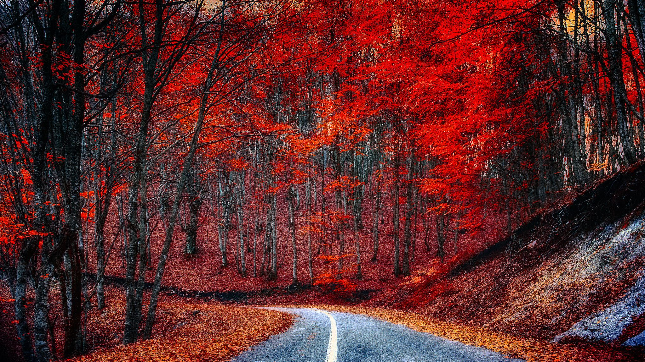 Dropped leaves on the road margins forest photos nature