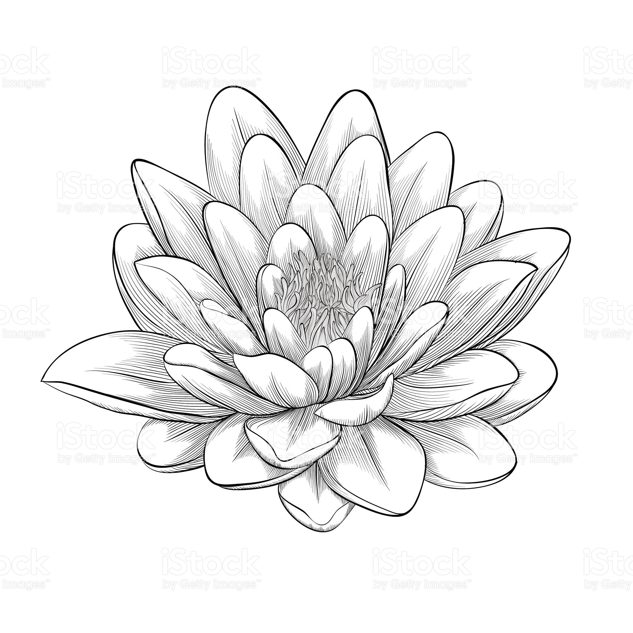 Beautiful Monochrome Black And White Lotus Flower Painted In