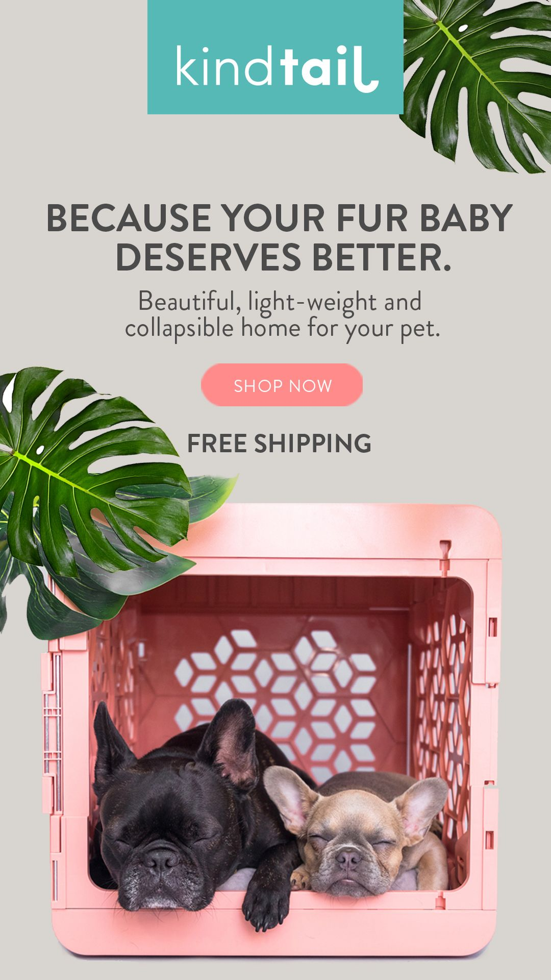 Modern Collapsible Plastic Dog Crates Dog Crate Plastic Dog
