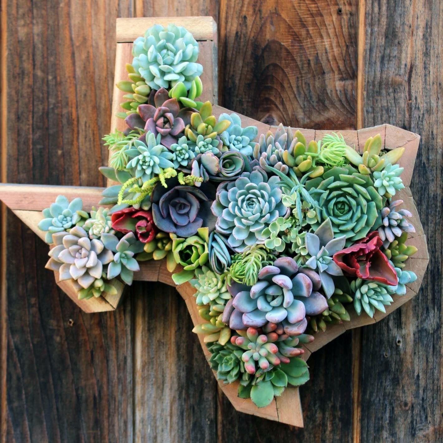 Hanging Texas Succulent Garden Apartment Pinterest