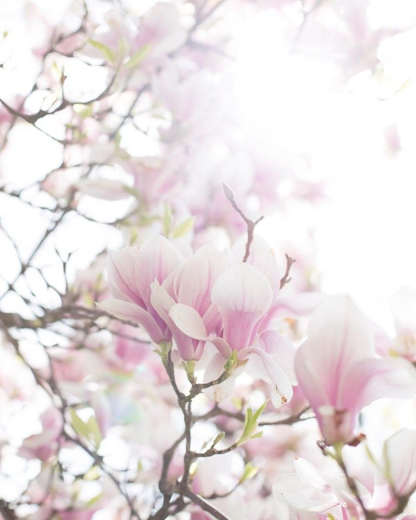Celebrate the arrival of spring with @lightpoem. Gorgeous magnolia blossom!