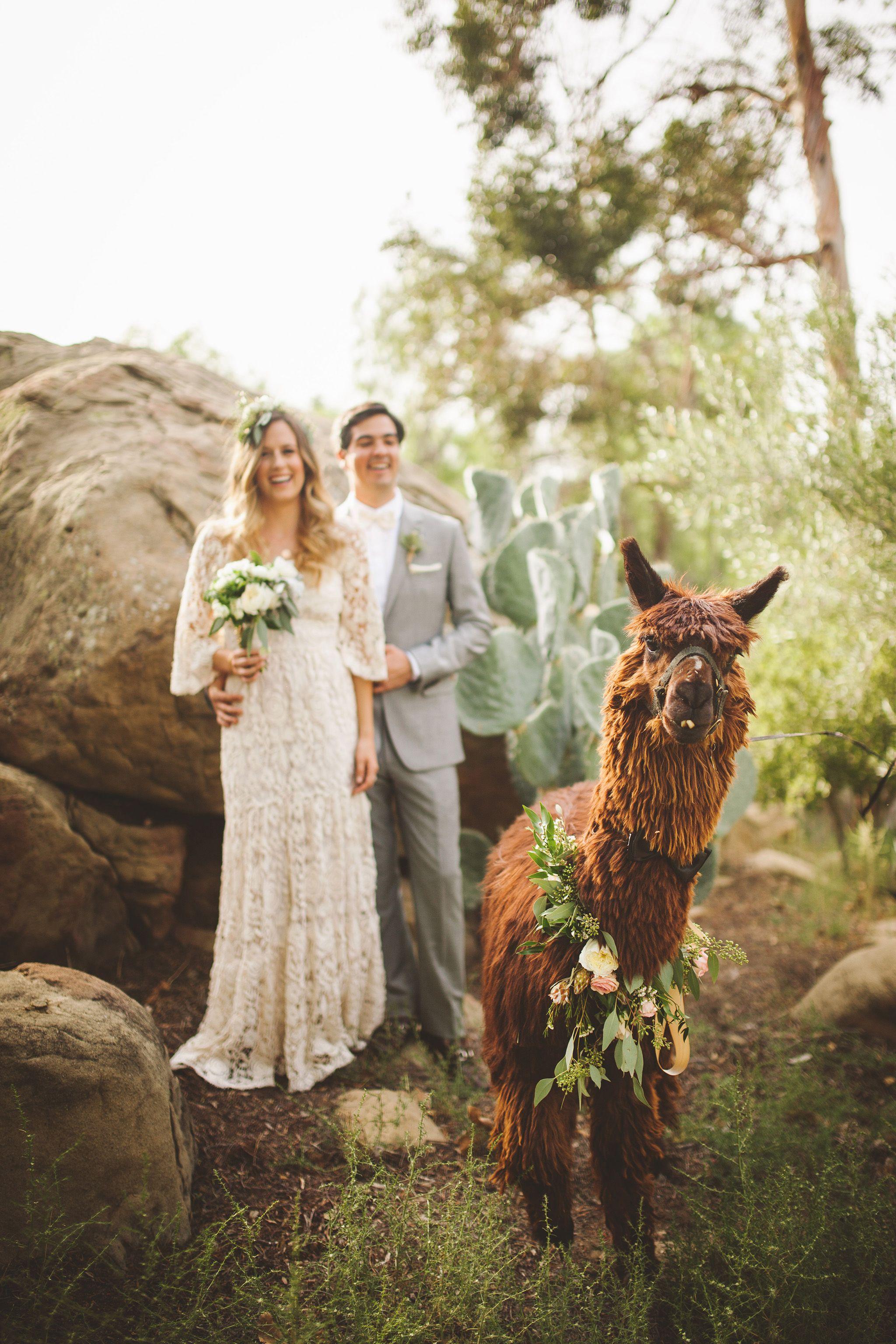 Los Angeles Wedding Photographer Hummingbird Nest Ranch Wedding Santa Susana Ca Wedding Pets Wedding Los Angeles Hummingbird Nest Ranch Wedding