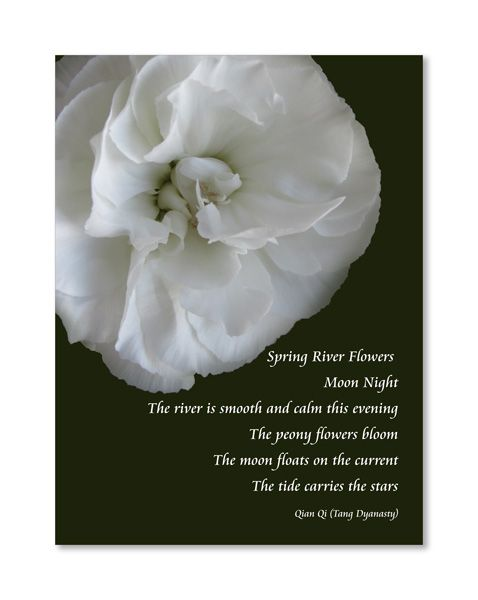 Pin By Priscilla Minton On Writing Pinterest Flowers Poems And