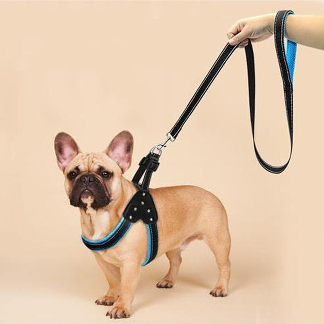 Pin On French Bulldog Collars Leads Harnesses