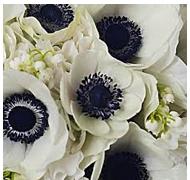 black anemones for the bridesmaids